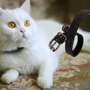 Kedi Boyun Tasmaları