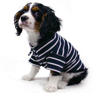 Köpek Gömlekleri